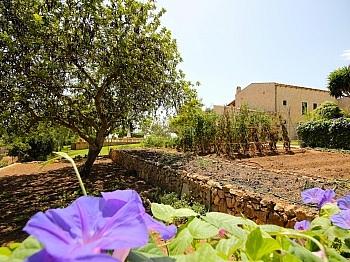 Bewässerung gemütlicher Stellplätze - Finca in Nähe San Lorenzo - Mallorca