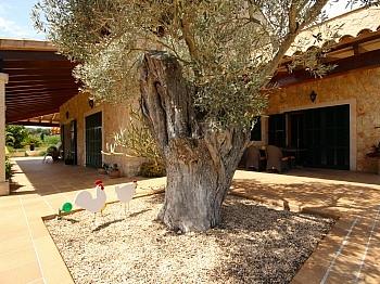 Luxusanwesen Hauszufahrt großzügig - Finca in Nähe San Lorenzo - Mallorca