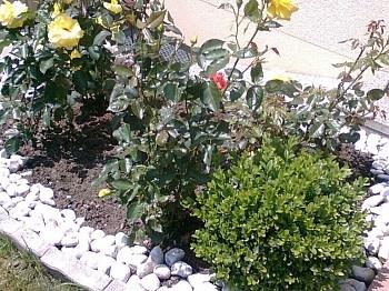 Vollmöbliert Fliesenböden teilmöbliert - Traumhafte neue 2 Zi Gartenwohnung in Feschnig
